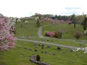 cemetery-dogwoods