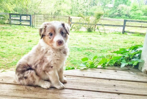 puppy sassy posing